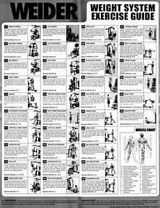50 Best Weider Crossbow Exercises Images On Pinterest