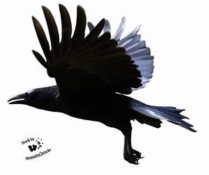 Raven Flying PNG Clipart | PNG Mart