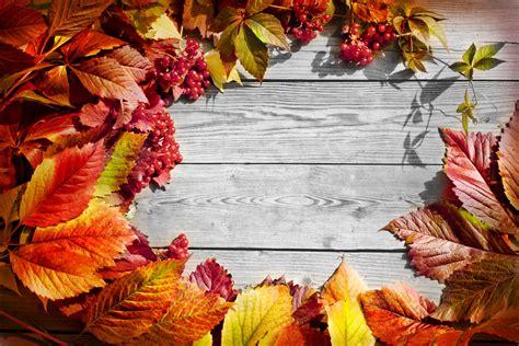 Hd Fall Pumpkin Wallpaper Leaves Fall Wood Autumn Wallpapers