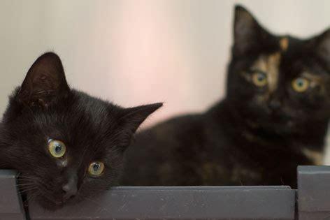 brechen bei katzen wenn die katze krank ist radio tirol