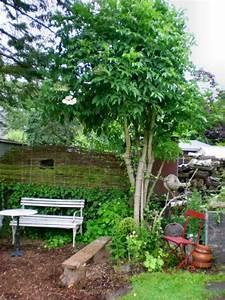 Kleiner Baum Garten : baum mit schirmartiger krone statt sonnenschirm gesucht ~ Lizthompson.info Haus und Dekorationen