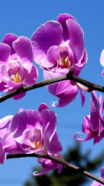 Orchid Purple Flowers Wallpapers