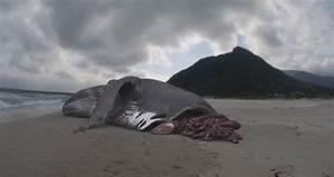 real megalodon sharks still alive MEMES