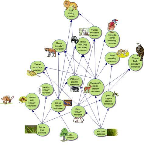 cuisine web food chain in africa pixshark com images