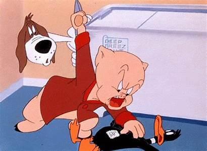 Porky Pig Gifs Cartoons Giphy Funny Animated