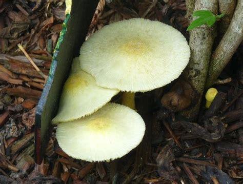Georgia Backyard Nature Fungi