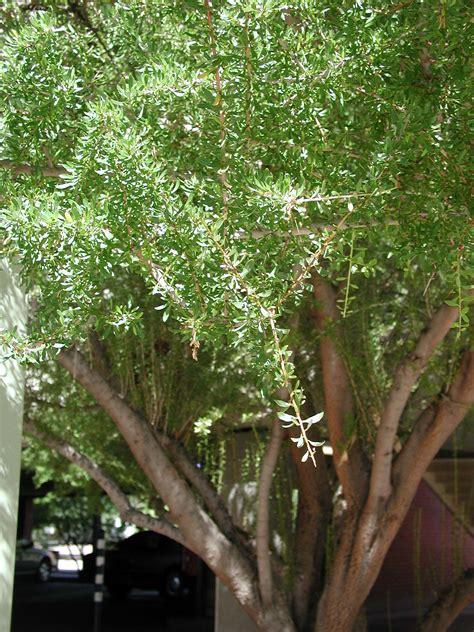 find trees learn university  arizona campus arboretum