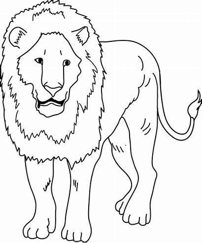 Lion Clipart Clip Drawing Coloring Lions Transparent