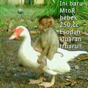 gambar lucu  unik  bikin ketawa terbaru kata mutiara