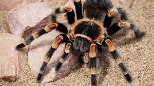 Deadliest Spider In The World To Humans