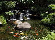 Fish & Koi Ponds Nualgi Ponds