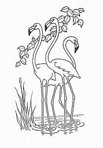 Birthday Flamingo Coloring Pages
