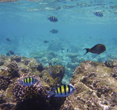Janine H Quot Unterwasserwelt Quot Hotel Kuramathi Island Resort Rasdhoo