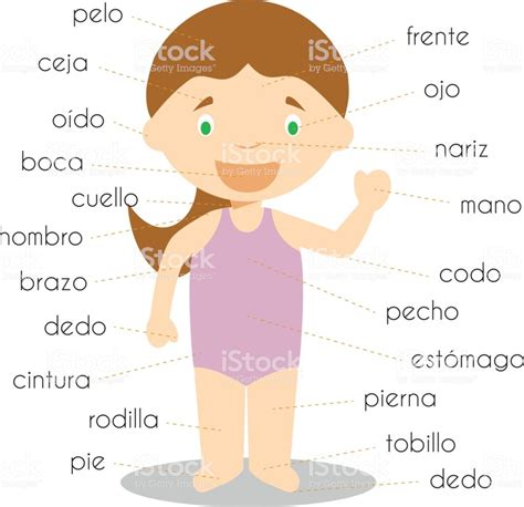Human Body Parts Vocabulary In Spanish Vector Illustration Stock Vector Art & More Images Of
