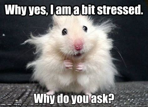 Mouse Meme - 25 most funniest mouse meme pictures and images of all the time