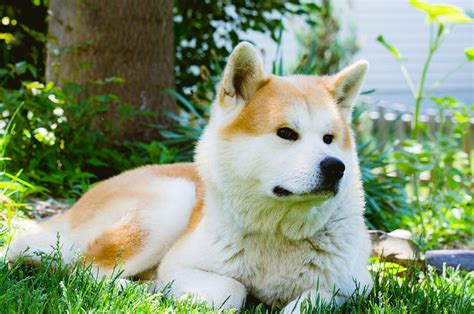 The Top 10 Most Expensive Dog Breeds In The World Care