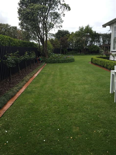 grass fescue seed zone transition extreme combat three fine lawn shade summer blend growing leaf