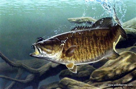 Artist Al Agnew Unframed Fishing Print Smallmouth Bass   WildlifePrints.com