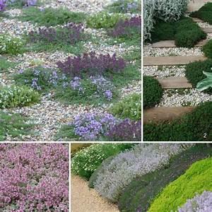 Couvre Sol Vivace : 10 couvre sols persistants qu 39 il faut avoir dans son ~ Premium-room.com Idées de Décoration