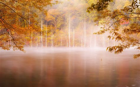photography landscape nature fall forest mist lake trees