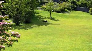 Rasen Düngen Bei Sonne : kostenlose foto gras pflanze sonne rasen wiese weide hinterhof garten golfplatz b ume ~ Indierocktalk.com Haus und Dekorationen