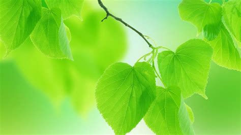 Leaves Green Nature Free Background Hd Desktop Wallpaper