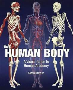 The Human Body  A Visual Guide To Human Anatomy Von Sarah