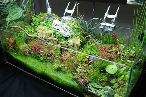 gatrdening frenzy planted tank terrarium