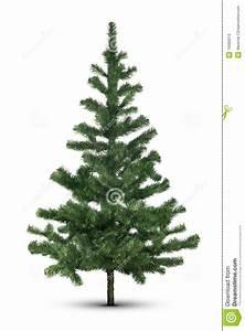 Evergreen Tree On White Stock Image  Image Of Background