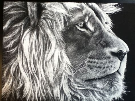 black  white lion scratch art art