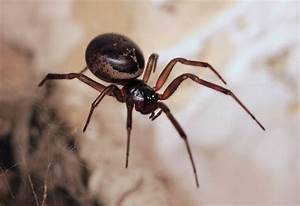 Common House Spiders: What's Around My Home?