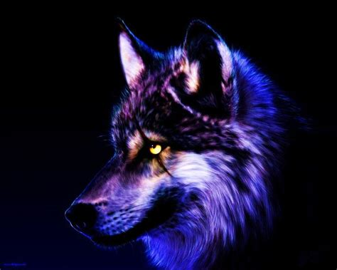 Cool Animal Wallpapers Wolf - cool purple wolves fixed wolf wallpaper by