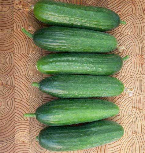 Cucumber Seeds by Picolino Organic Cucumber Seeds