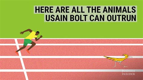 Here Are All The Animals Usain Bolt Can Outrun Doovi