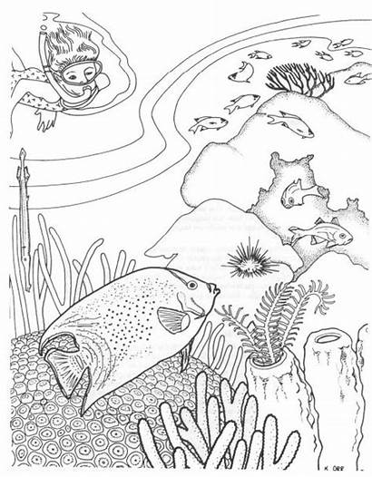 Coloring Pages Fish Tropical Printable Adults Ocean