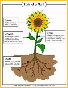 4th Graders Daniel Mart U00edn  Natural Science  Living Things  Plants