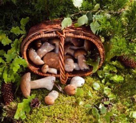 Pilze Im Garten Durch Rindenmulch by Pilze Bestimmen Nicht Nur Im Zweifel Die