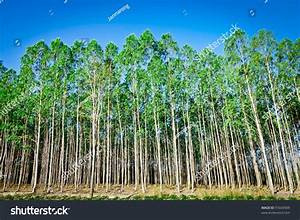 importance of tree plantation