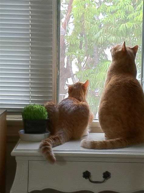 Cat Climbing Window Screen