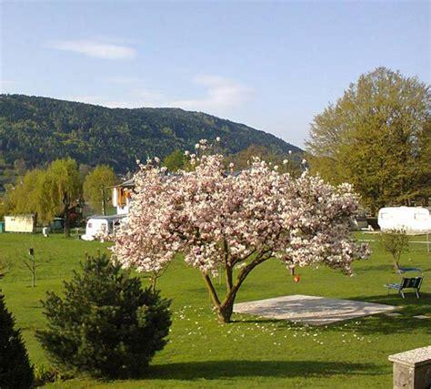 gardens  magnolia trees  healing backyard ideas