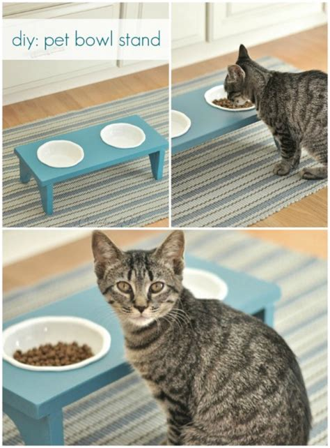 purrfect diy projects  cat owners diy crafts