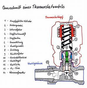 Wie Funktioniert Ein Heizkörper : wie funktioniert ein thermostatventil haustechnik verstehen ~ A.2002-acura-tl-radio.info Haus und Dekorationen