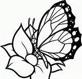 Coloring Pages Butterflies Flowers Butterfly Printable Flower Drawing Draw Drawings Colour sketch template