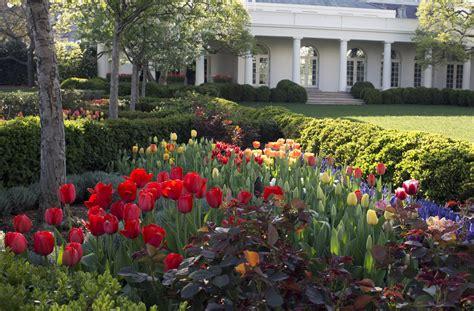 tulip gardening cowboy gardening for tulip lovers wtop