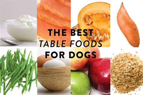 table food for dogs best table foods for dogs