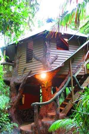 daintree accommodation rainforest treehouse