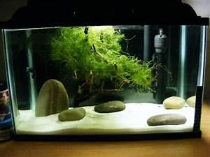 Deco Aquarium Zen : zen garden 5 gallon the planted tank forum aquarium ~ Melissatoandfro.com Idées de Décoration