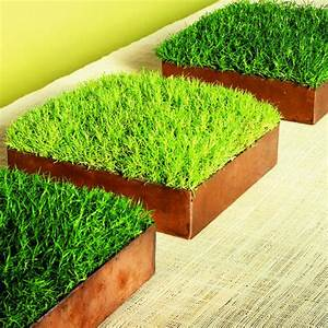 Moss boxes - Sunset