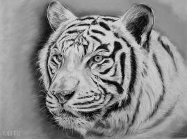 realistic pencil drawing   tiger  booters  deviantart
