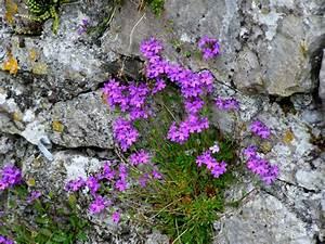 photo of rocks and plants | grow - rocks | Pinterest ...